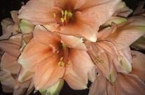 Bloemen 20