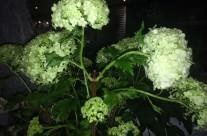 Bloemen 19