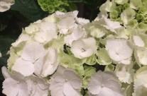 Bloemen 18