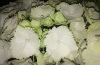 Bloemen 17