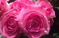 Bloemen 15