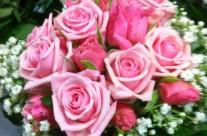 bloemen 10-08-15